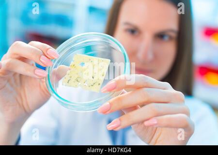 -MODELL VERÖFFENTLICHT. Junge Frau, die Käse in Petrischale im Labor für die Qualitätskontrolle zu studieren. - Stockfoto