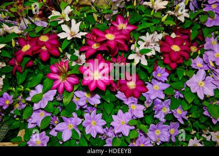 chelsea flower show 2016; thorncroft clematis, blume, skulptur, Garten ideen