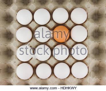 Tablett mit weißen Hühnereier und ein braun Ei, organisches geometrische Muster konzeptuelle Fotografie - Stockfoto