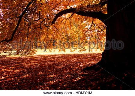 Heller herbst farbige bl tter neuengland im herbst new hampshire usa stockfoto bild 89300277 - Garten baum fallen ...