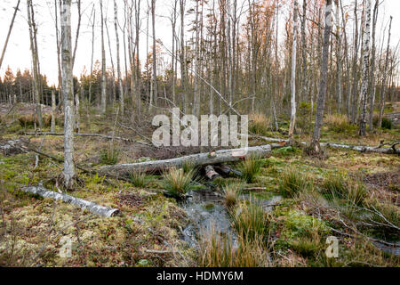 Bäume von Natur in einem Bereich der Entwaldung verschluckt - Stockfoto