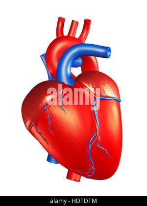 Menschliches Herz, 3D illustration Stockfoto, Bild: 129000837 - Alamy