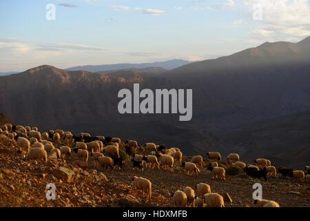 Schluchten des Hohen Atlas, Marokko Stockfoto