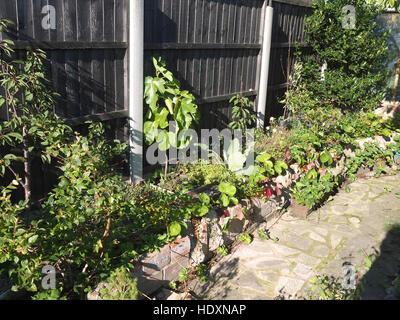 Hochbeet Mit Kirschbaumen Feigen Heidelbeeren Erdbeeren Und Holly