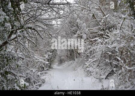 Bürste Hill Nature Reserve, Princes Risborough, Buckinghamshire, Großbritannien. Weg durch den Wald im Schnee. - Stockfoto