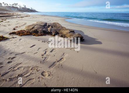 "das Wort ""Windansea"" in den Sand geschrieben. Windansea Beach, La Jolla, Kalifornien. - Stockfoto"