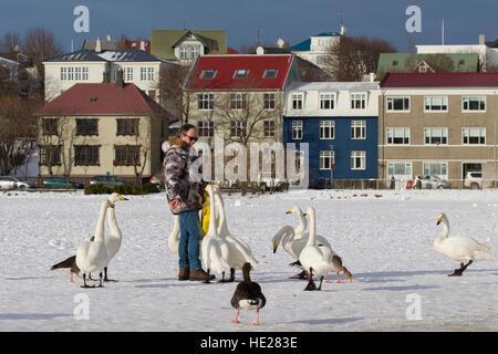 Mann, die Fütterung Singschwäne (Cygnus Cygnus) von Hand auf einem zugefrorenen See im Winter in der Stadt behütet, - Stockfoto