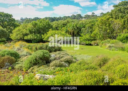 Kirstenbosch Kapstadt - Stockfoto