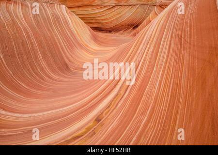 Roter Sandstein-Wave - Walzen aus rotem Sandstein Felsen Wellen in The Wave in North Coyote Buttes Gebiet an der - Stockfoto