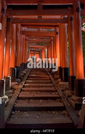 Torii-Tore im Fushimi Inari-Taisha Shinto-Schrein, Kyoto, Japan - Stockfoto