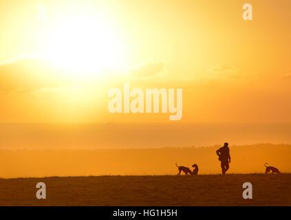 Land Gent in Tweed mit drei Hunden. Sonnenuntergang auf der South Downs in der Nähe von Lewes - Stockfoto