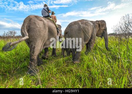 Elefantenreiten in Weg Missions-Nationalpark, Lampung, Sumatra, Indonesien. © Reynold Sumayku - Stockfoto