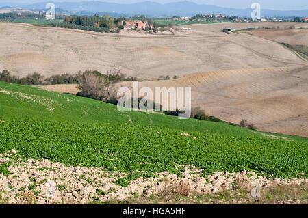 Blick auf Feldern in der Crete Senesi Region in Tuscany Mittel-Italien - Stockfoto