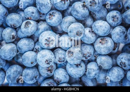 huckleberry isoliert auf wei em hintergrund ausschnitt blackberry oder blau anzustellen oder. Black Bedroom Furniture Sets. Home Design Ideas