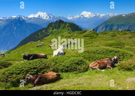 Mischabel, Matterhorn, Weisshorn, Schweizer Alpen, Wallis, Schweiz - Stockfoto