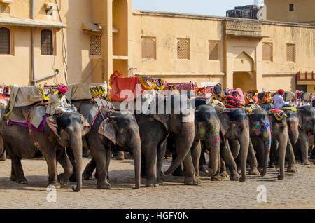 Die indischen Elefanten in Ambers Fort in Indien, eine Landschaft, Nähe, Bernstein, Indien, Jaipur, Zuhause, Gebäude, - Stockfoto
