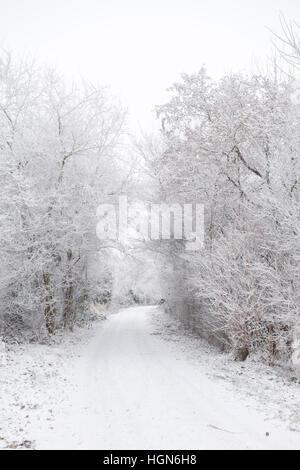 Winter-Pfad - Stockfoto