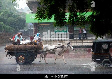 Bullock Cart Passing auf der Straße bei starkem Regen in Rajasthan, Indien. - Stockfoto