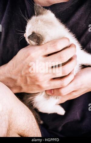 Junger Mann Hände halten ein Baby siamesische Kätzchen - Stockfoto
