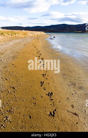 Caribou Fußspuren im Sand am Ufer des ein Bergsee. - Stockfoto