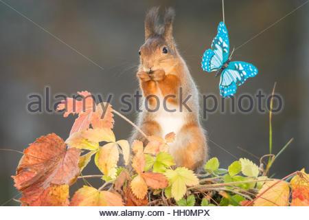 Fantastisch Eichhörnchen Auf Draht Ideen - Der Schaltplan - greigo.com