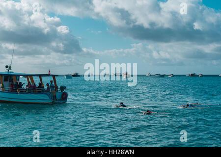Touristen Schnorcheln vor der brasilianischen atlantischen Insel Fernando De Noronha, jeweils gezogen von einem - Stockfoto