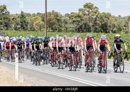 Adelaide, Australien. 17. Januar 2017. Radfahrer von der Trek - Segafredo-Team (TFS) während der 1. Etappe der Santos - Stockfoto