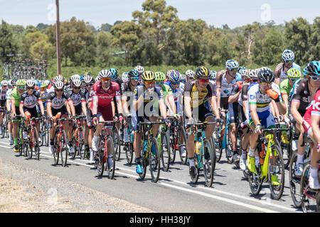 Adelaide, Australien. 17. Januar 2017. Radfahrer in Phase 1 der Santos Tour Down unter 2017. Bildnachweis: Ryan - Stockfoto