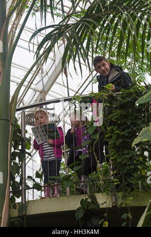 Zwei junge Mädchen und ein Mann auf der Suche nach Schmetterlingen im Glasshouse, RHS Garden Wisley, Woking, Surrey, - Stockfoto