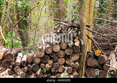 Gehacktes Holz stapeln in Wald, Somerset, England, UK - Stockfoto