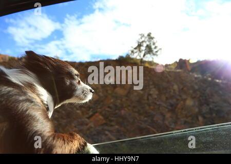 Hund Gefühl frische Luft vor dem Fenster - Stockfoto