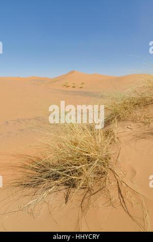 Berühmte und inconic Sahara-Dünen von Erg Chebbi in der marokkanischen Wüste in der Nähe von Merzouga, Marokko, - Stockfoto