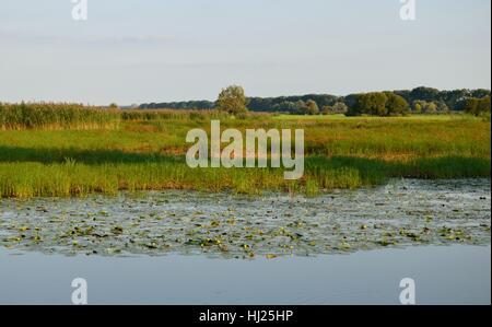 Nationalpark, Polen, Nationalpark, Naturschutz, Europa, Polen, - Stockfoto