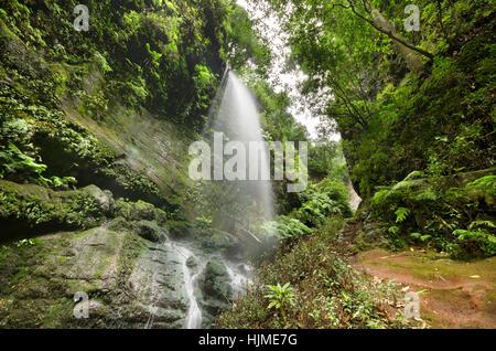 Spanien, Kanarische Inseln, La Palma, Los Tilos, Wasserfall - Stockfoto