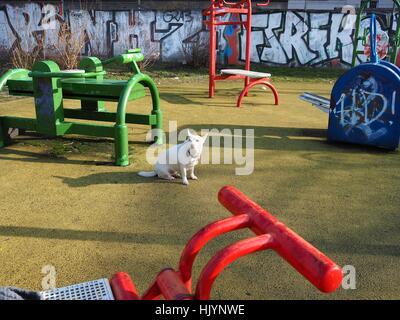 Ein Hund sitzt auf einem Spielplatz Fpr Kinder in Berlin am 7. Februar 2016 abgebildet. Dieses Foto ist Teil einer - Stockfoto