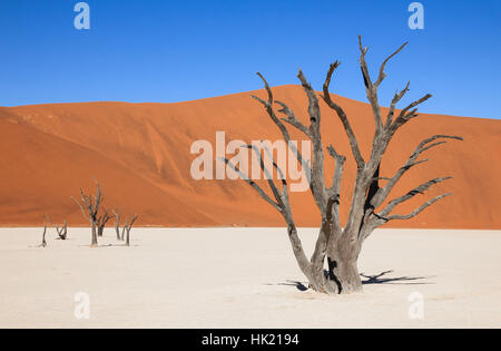 Die landschaftlich Sossusvlei und das Deadvlei. Großen Ton und Salz Pfanne mit geflochtenen Akazien, umgeben von majestätischen Dünen.