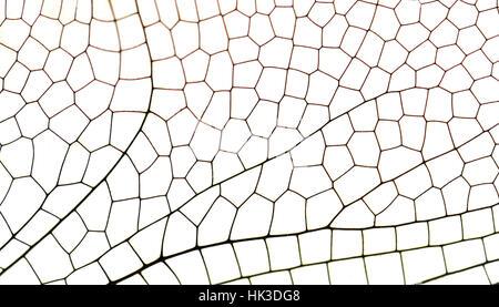 Flügel-Libelle Nahaufnahme isoliert auf weiss - Stockfoto