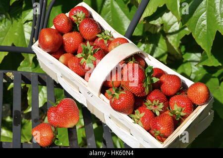 Stuhl Rot Erdbeeren Behandeln Süß Grün Glanz Leuchtet Hell