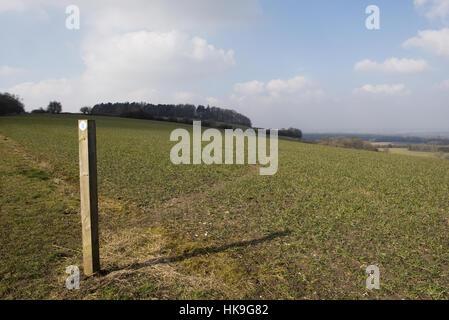 Wanderweg-Zeichen und Weg durch Phasen von Feldinhalten Winterweizen auf den Norden Wessex Downs im März - Stockfoto