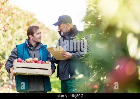 Männlichen Bauern mit Scheffel von Äpfeln und Zwischenablage sprechen im Obstgarten - Stockfoto