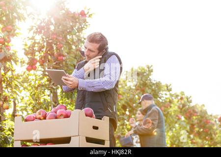 Männliche Bauer mit digital-Tablette reden über Handy im sonnigen Garten mit Apfelbäumen - Stockfoto