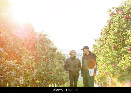 Landwirte mit Zwischenablage im sonnigen Garten mit Apfelbäumen im Gespräch - Stockfoto