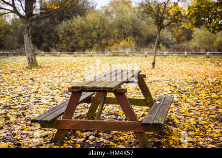 Picknicktisch im bunten Herbstwald - Stockfoto