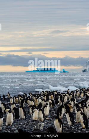 Eine Brutkolonie von Adelie-Pinguine auf einer Insel in der Antarktis. - Stockfoto