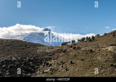 Kleinen Steinhütte neben einer kleinen Gruppe von Tannen auf einem Bergrücken in der Balagne Region Korsikas mit - Stockfoto