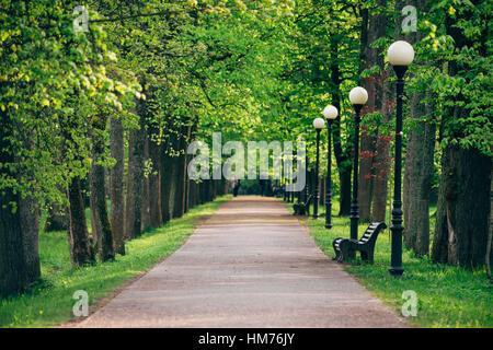Wunderbare Gasse mit frischen Frühling Bäume, perspektivische Ansicht mit selektiven Fokus - Stockfoto