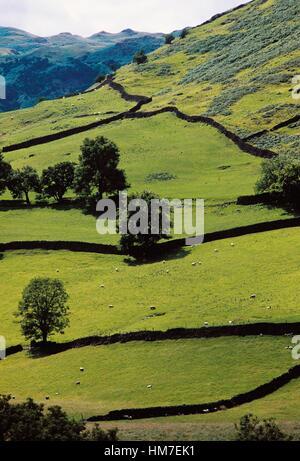 Landschaft mit Schafbeweidung, Highlands, Schottland, Vereinigtes Königreich. - Stockfoto
