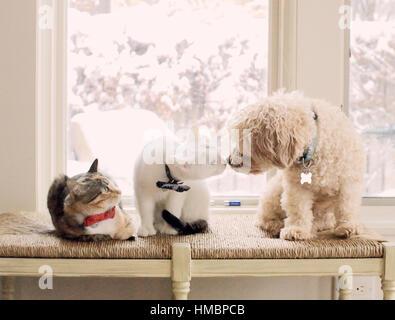 Drei Tiere, zwei Katzen und ein Hund auf einer Bank in einem lichtdurchfluteten Raum zu interagieren. Die Tiere - Stockfoto