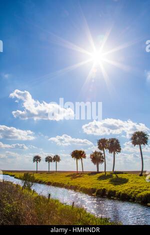 Palmen über Wasserkanal im Süden von Zentral Florida - Stockfoto