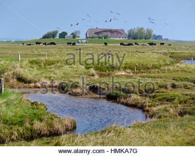 Landschaft auf Hallig Langeneß mit Wohnung Hügel ´Treuberg´, Wattenmeer, Nordsee, Schleswig-Holstein, Deutschland, - Stockfoto